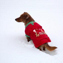 cappottino-cane